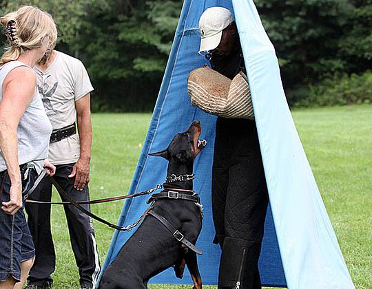 Traci training bark and hold